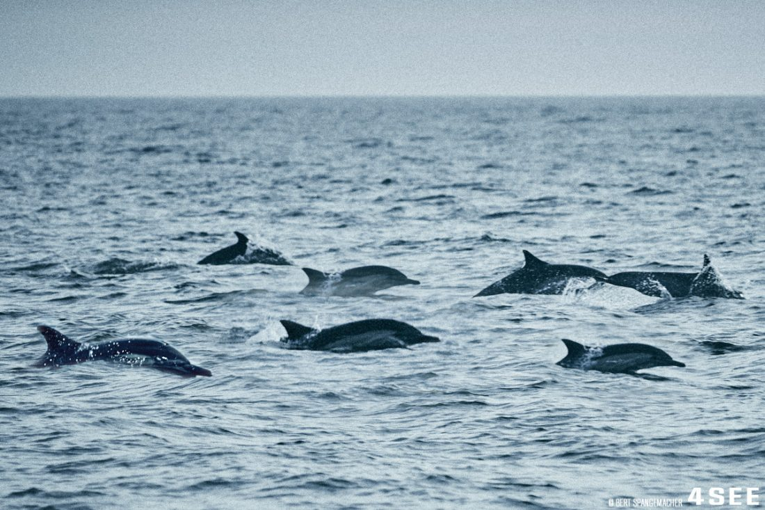 Costa Mesa Dolphins
