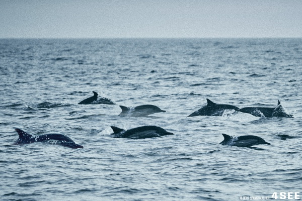 Costa Mesa Dolphins