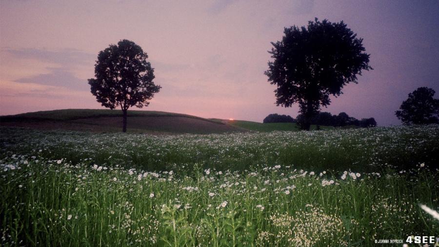 "4SEE Artist Profile 12 Joanna Szproch ""sentimental landscape in poland"""